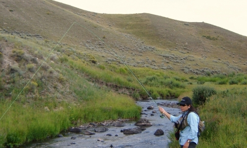 Blacktail Deer Creek Yellowstone Fishing Stream