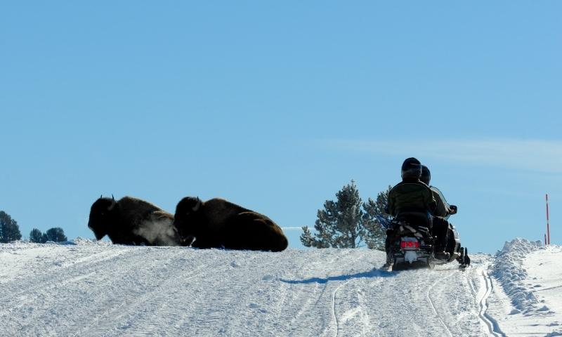 Yellowstone Snowmobile