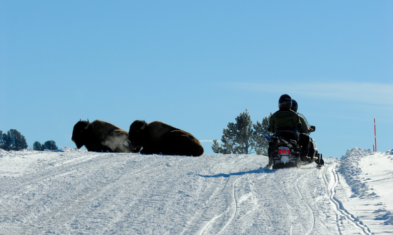 Yellowstone National Park Winter Vacations Amp Activities