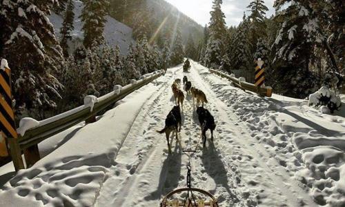 Yellowstone Winter Vacations Dog Sledding