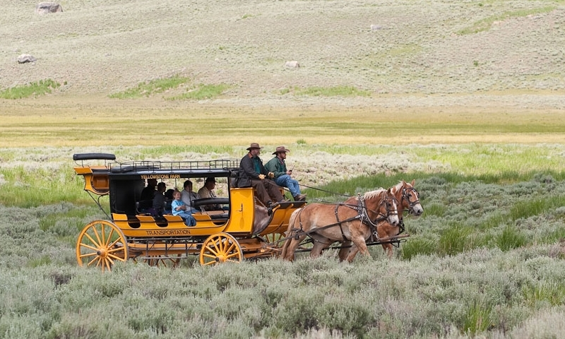 Wagon Ride Train Yellowstone National Park