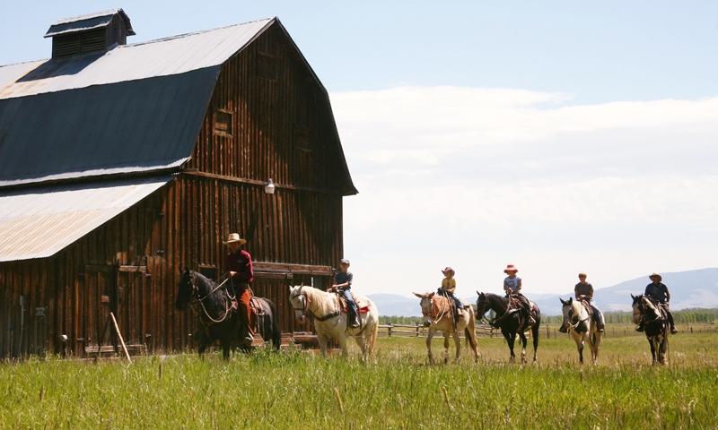 Horseback Riding Yellowstone