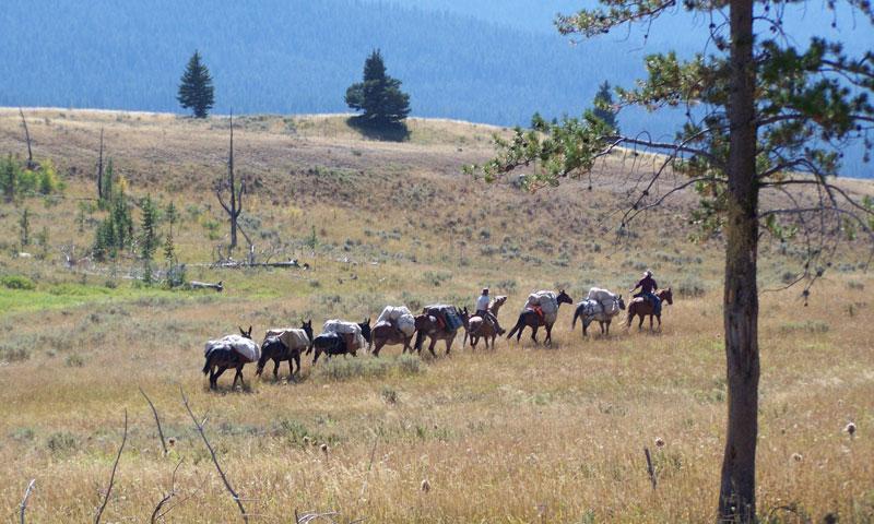 Horse Pack Trip near Slough Creek