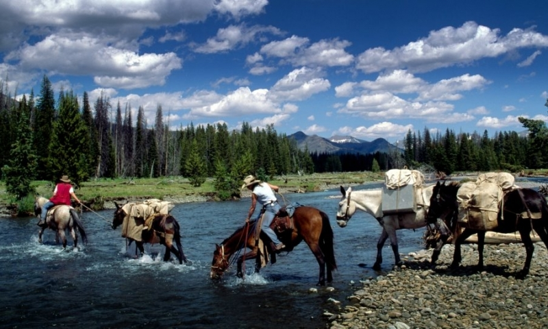 Yellowstone Horse Pack Trips