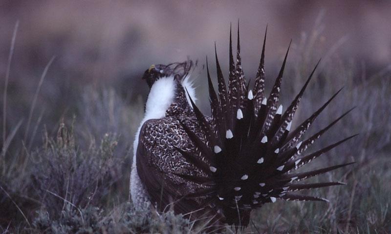 Wyoming And Montana Hunting