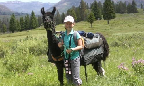 Yellowstone Park Tours Llama Trekking