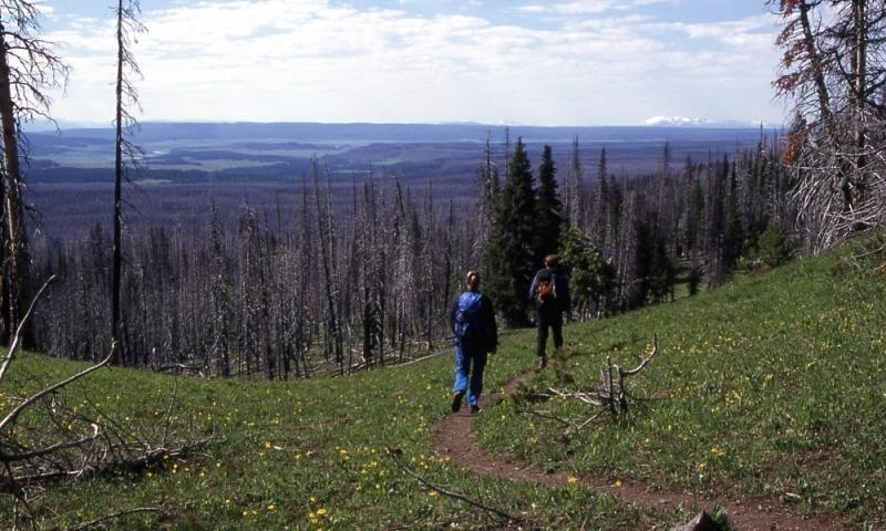 Canyon Village Observation Peak Trail